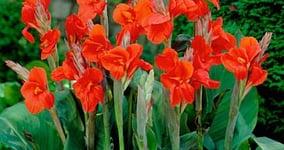 Jak správně pěstovat tulipány